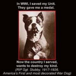 Sargent Stubby the Pitbull by InvadorJessie