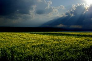 stormy meadow by technologyMan