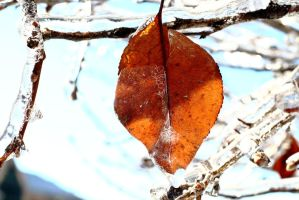 ice by GSMStreetPhotography