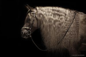 horse in the black by miszka74