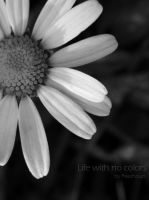 Life with no colors by EliPoppy