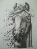 Horse by NewfieArtGirl