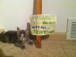 Misty Supports Toontown! by tayloi