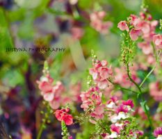 in the garden ... by burcyna