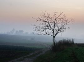 Foggy sunset II by starykocur