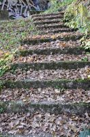 stairs of leaves by marlene-stock