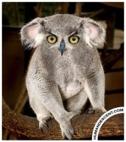 Koalowl by HumanDescent