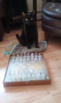 My Cat Playing Chess W/ Me~ by Shadowfang02