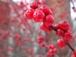 Plumply Shriveled Red Berries by AnnamaeTezuka