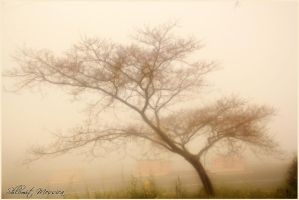 On a foggy day by ShlomitMessica