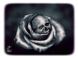 Rose with skull by thecasperart