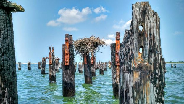 Osprey Nest at Cape Henlopen by greenwinters