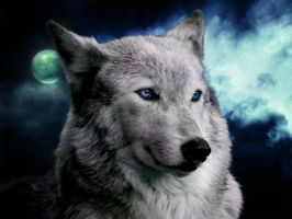 Wolf Blue by lowlivier