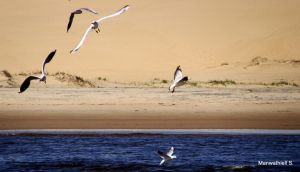 Trying Sea Gulls by Manwathiell