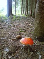 solitary toadstool by czmartin