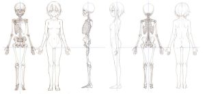 Anime Anatomy by Bardi3l