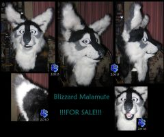 Blizzard Malamute by Sharpe19