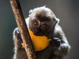 Batu Monkey - II by InayatShah