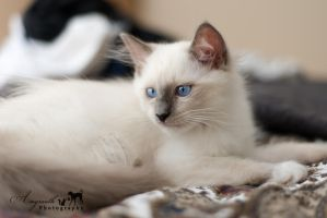 Merlin on the Bed by AmyranthPhotography