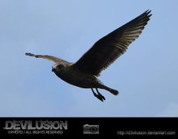 IMG_6225 by D3vilusion