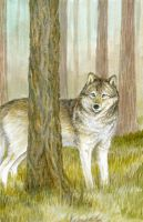 Timber Wolf by LisaCrowBurke