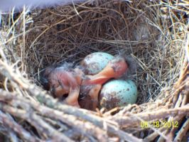 Birdies, just hatched. by annieheart12