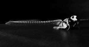 Dead snake by tooldissectional