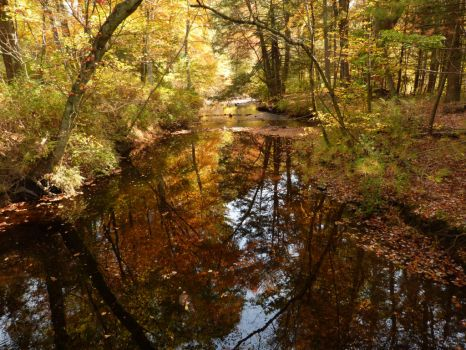 Fall (wide view) by brokenvine