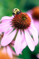 Another Buzy Bee by tCentric-media