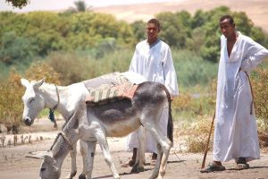 Two Men and Two Donkeys by Snazz84