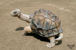 George the Gourd Galapagos Tortoise by ART-fromthe-HEART