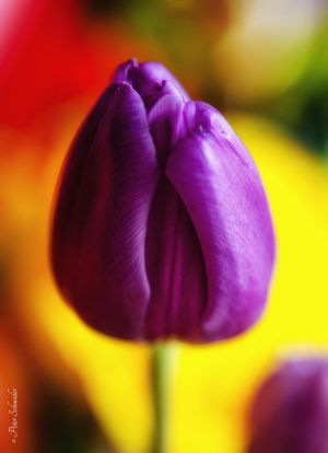 Love colours. by Phototubby