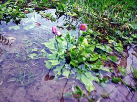 Flowers In A Puddle by MrsPhotoshopkilla