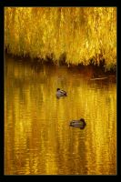 On Golden Pond by hugznstuff