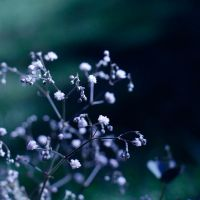 Winter blues. by indie-click