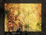 2013 Calendar - Nature by AljoschaThielen