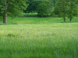 Meadow Stock 1 by FiagaiStock