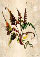 fern 2 by paperdull