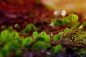 spring fever No.5 by landscapesaxony