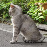 Cat in Japan:Cat on street 164 by iguru71