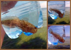 Fish in a Bottle (Day 180) by Hedwigs-art
