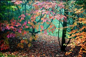 colourful autumn by Zlata-Petal