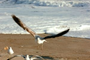 Seagull 2 by denehy