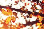 Autumn Leaves by Identifyed-Khaos