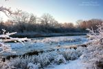 Snowy Marsh by Passion4Photos