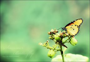 Summer Butterfly ,,, by HaniD8