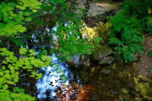 Creek Stock 1 by Moonchilde-Stock