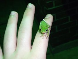 Tree Frog 1 by Imperius-Rex