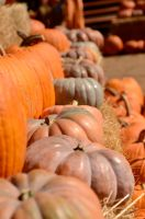Pumpkin Row by Caitiekabob