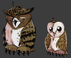 Barn Owls are cute by Bubocroc